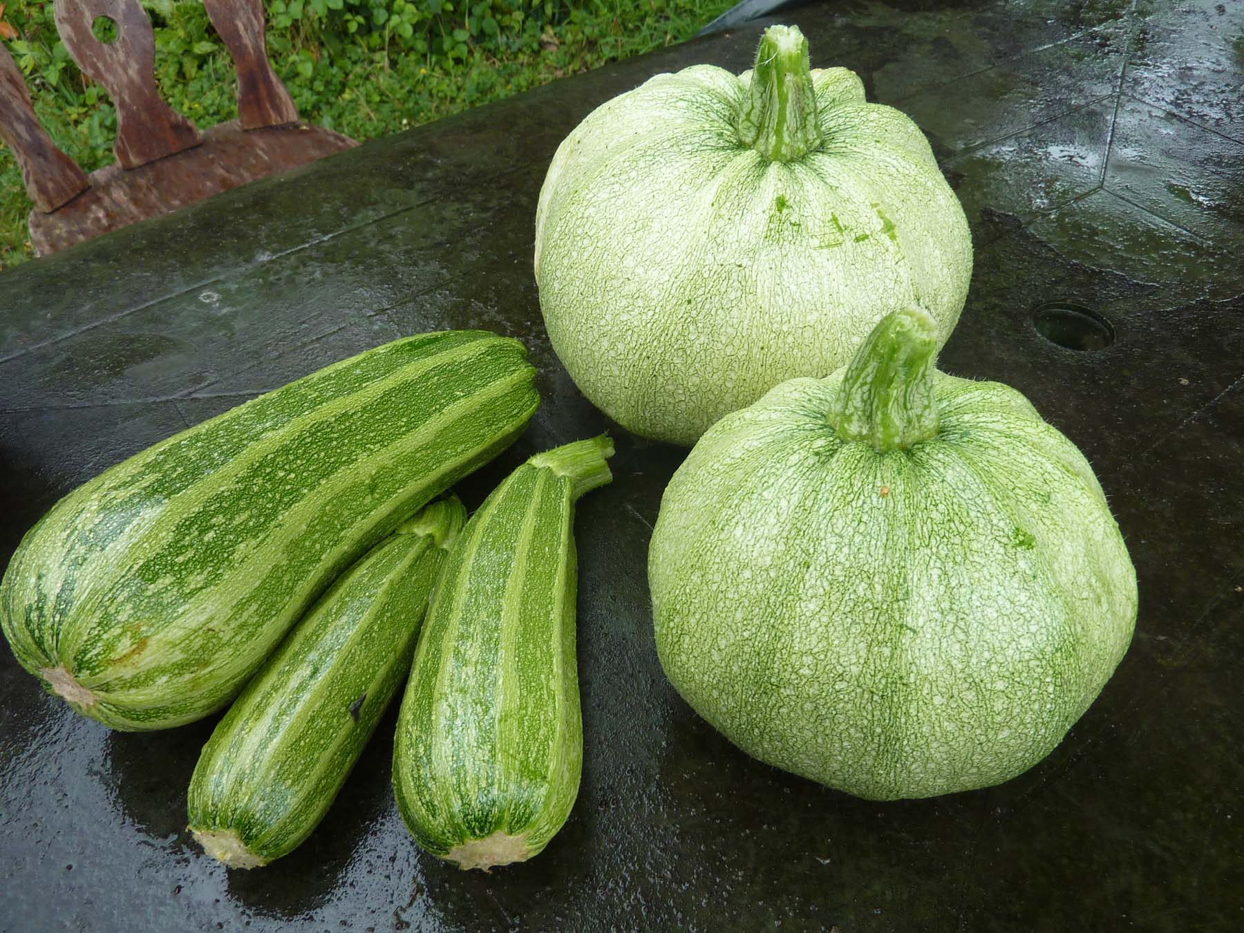 M is for … monster marrows
