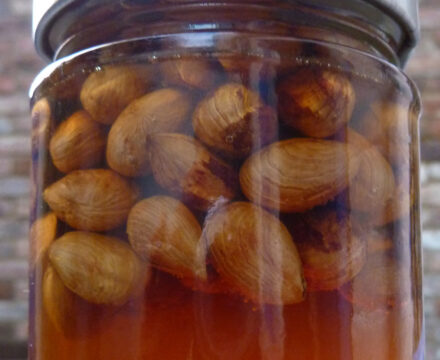 making honeyed hazelnuts from foraged cobnuts