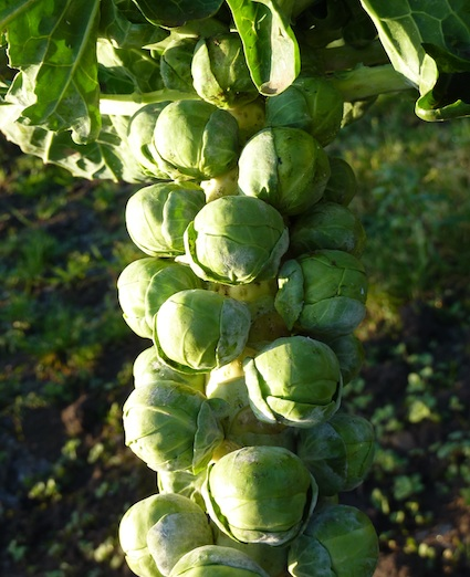 soul cheering sunshine and sprouts