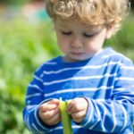 allotment toddler broad beans - nipitinthebud.co.uk
