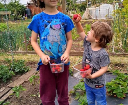 Gardening with kids in 2020