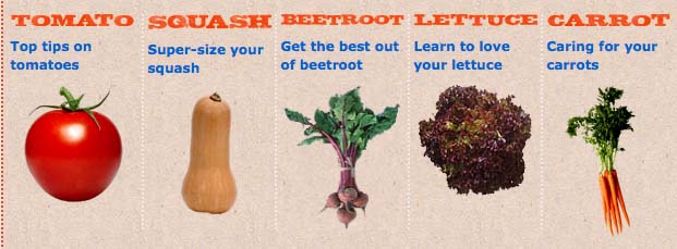 BBC Dig in veg guides copy