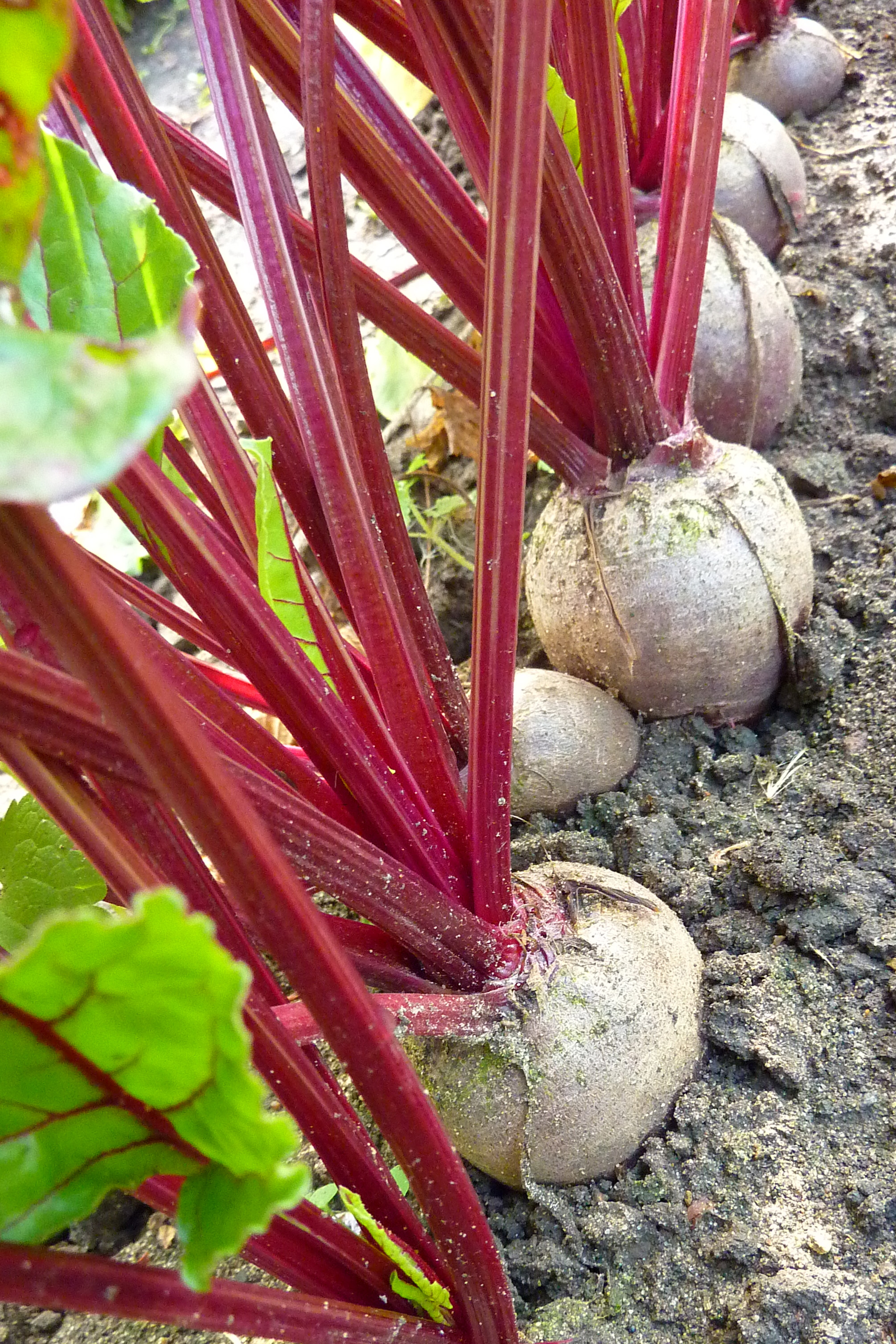 beetroot for risotto