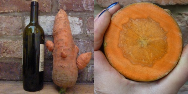 MOSAIC - supersized carrot