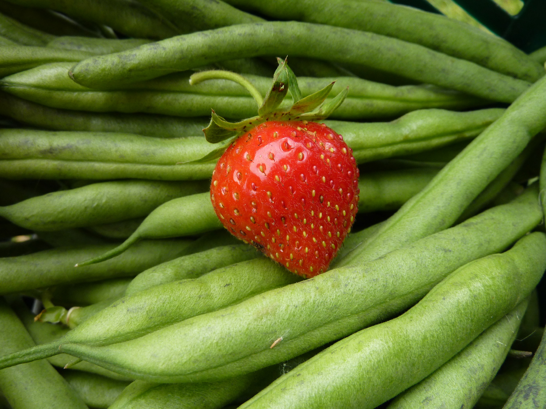 Strawberry and dwarf beans picked
