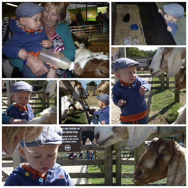 Cotswold Farm Park collage 4B