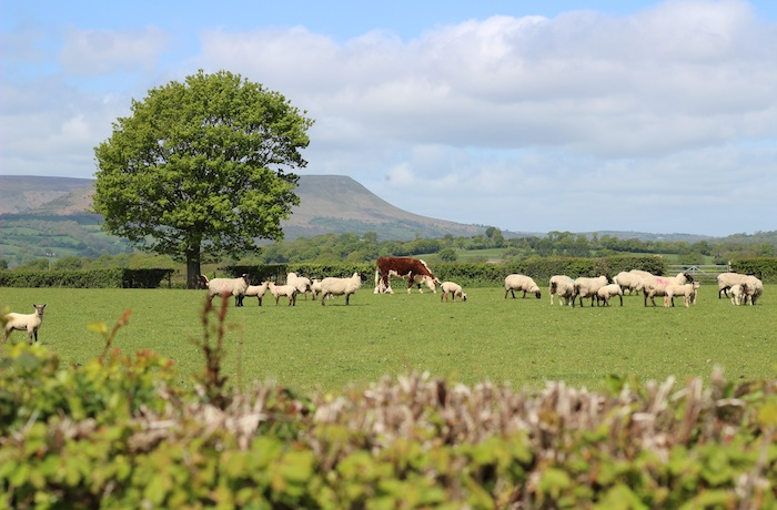16-5-15 - Farm cottage_black mountains view 4B