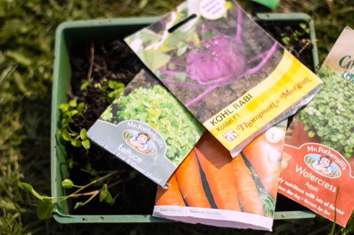 21-4-18- allotment-seeds sown