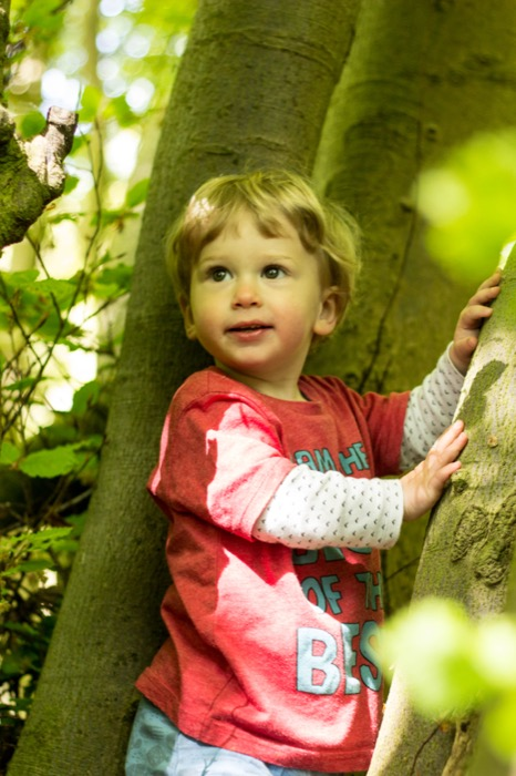 Cranham woods_tree climbing toddler - nipitinthebud.co.uk