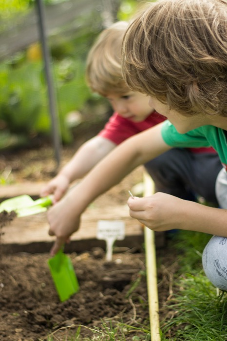 gardening with kids (during a heatwave)