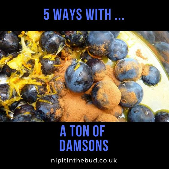5 ways with a ton of damsons - nipitinthebud.co.uk