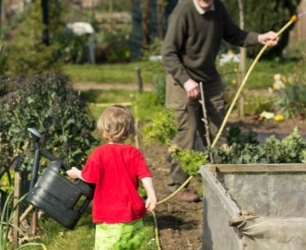 gardening with kids – first allotment sowings 2019